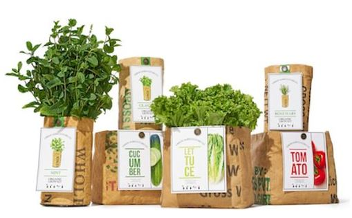The Urban Agriculture Organic Grow Kit, $27 (click to shop)