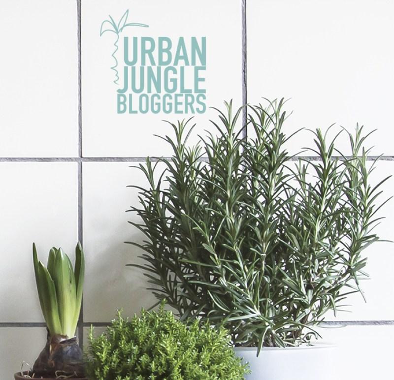 Kitchen Greens | Urban Jungle Bloggers