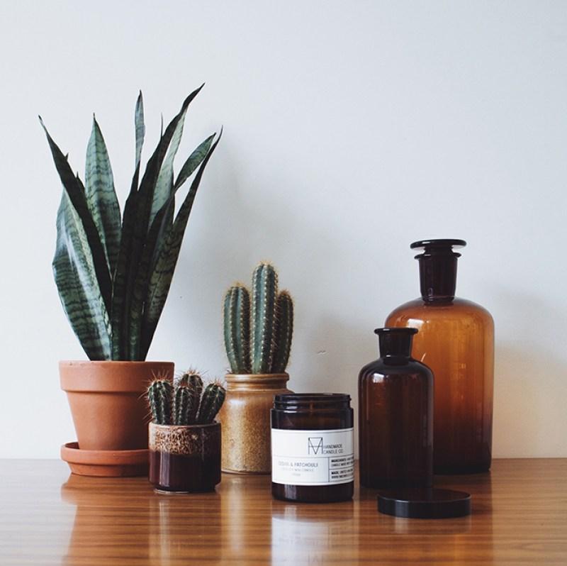 Plants & Bottles