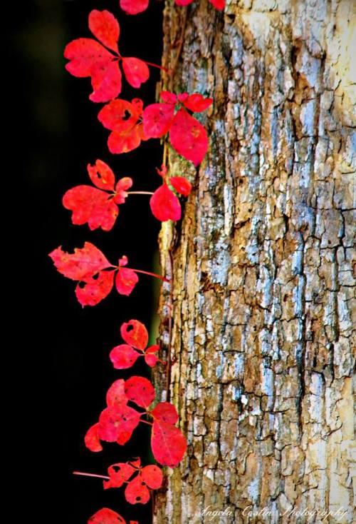 angela costin tree