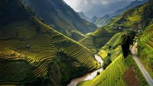 Rice-Terraces-In-Vietnam-Wallpaper
