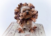 TRENDS | 10 Amazing Halloween Costumes for Pets