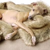 9 of the Best Designer Dog Blankets