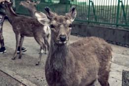 Have You Seen This Japanese Deer City? A Photo Diary of Nara, Osaka and Kyoto 9