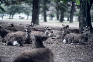 Have You Seen This Japanese Deer City? A Photo Diary of Nara, Osaka and Kyoto 11