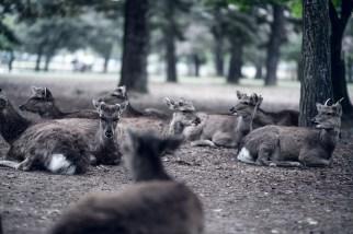 Have You Seen This Japanese Deer City? A Photo Diary of Nara, Osaka and Kyoto 11