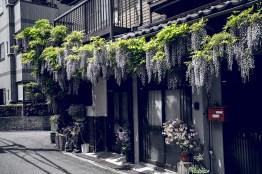 Have You Seen This Japanese Deer City? A Photo Diary of Nara, Osaka and Kyoto 3
