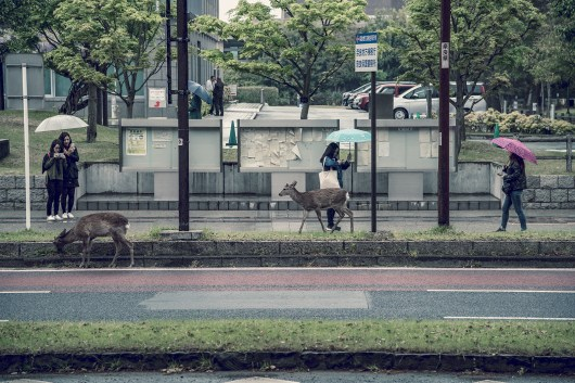 Have You Seen This Japanese Deer City? A Photo Diary of Nara, Osaka and Kyoto 5
