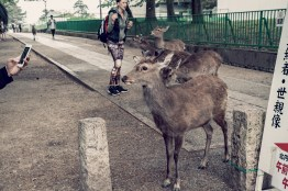 Have You Seen This Japanese Deer City? A Photo Diary of Nara, Osaka and Kyoto 8