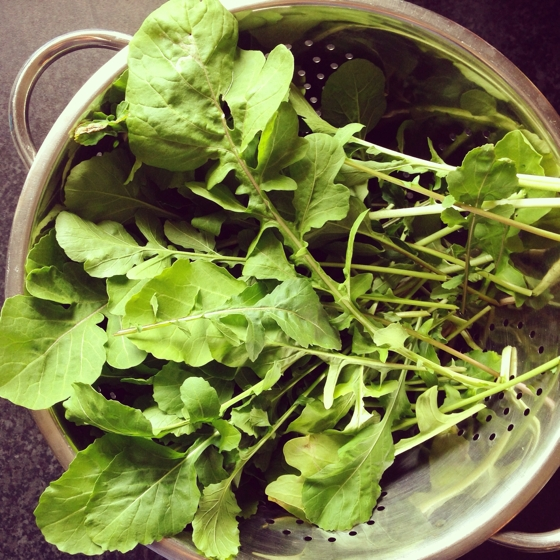 Fresh rocket from the garden