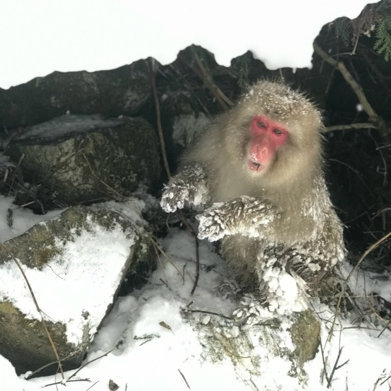 The Snow Monkeys | Japan