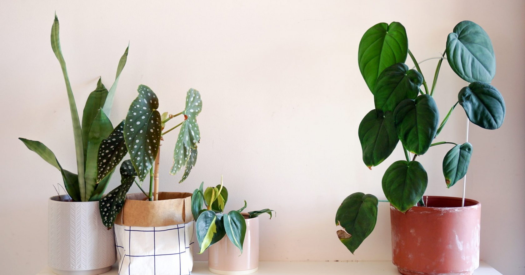 8 Low Light Houseplants Perfect For Autumn To Buy Now