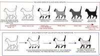 Colour and coat genetics in cats