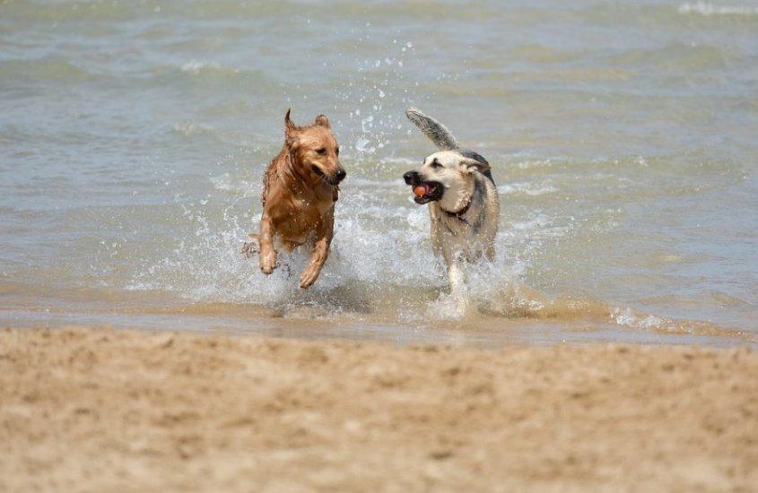 Harmonia Dog: le 7 cose da portare in spiaggia con il tuo cane