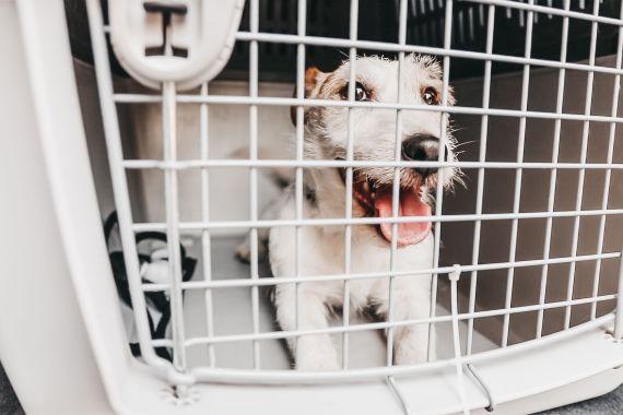 sicurezza dei cani in auto Harmonia + Ford