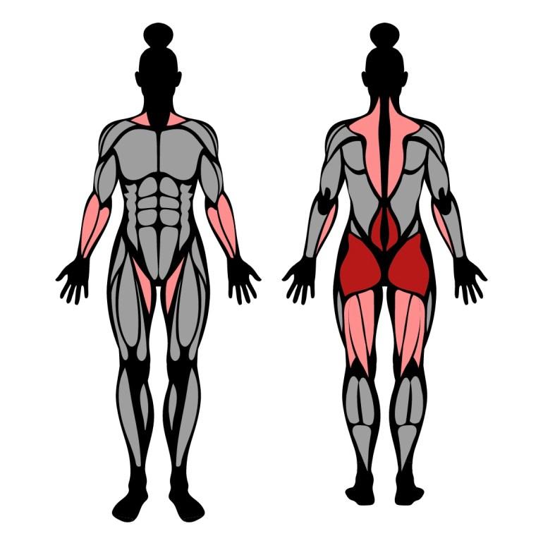 Muskler som tränas av kettlebellsving
