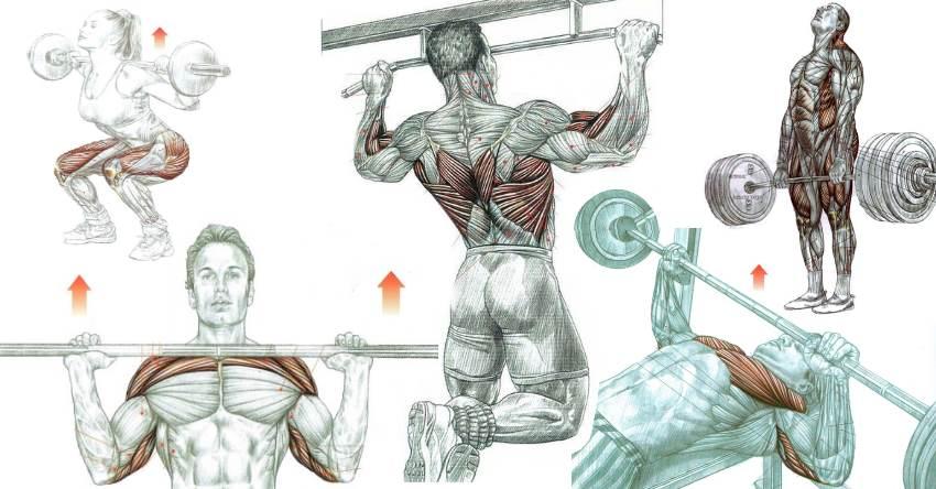 chins vilka muskler