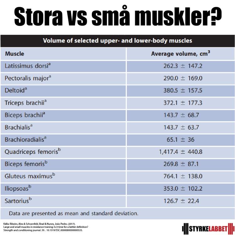 Stora vs små muskler