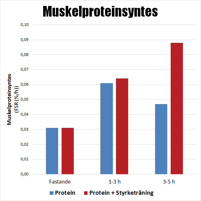 hur mycket protein tar kroppen upp