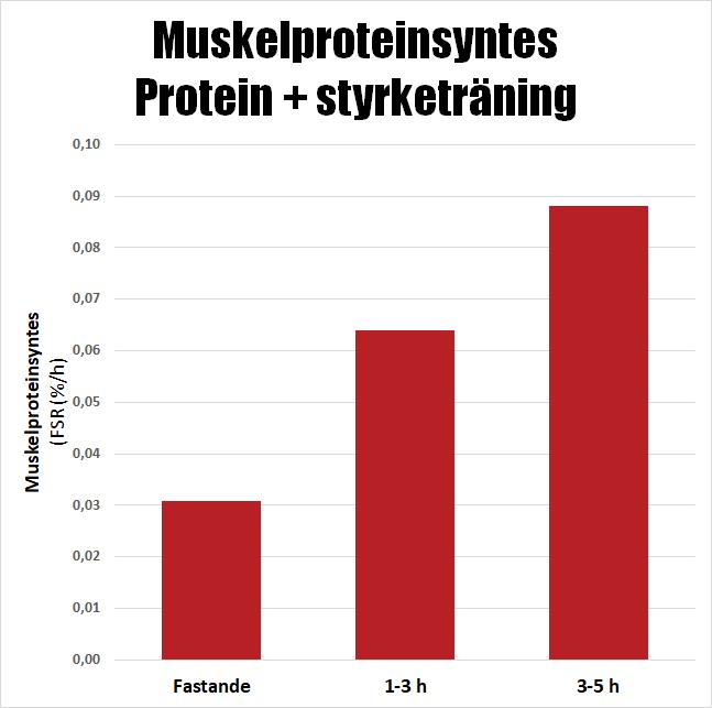 Muskelproteinsyntes protein och styrketräning