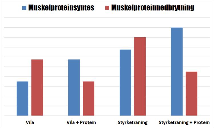 Styrketräning och protein