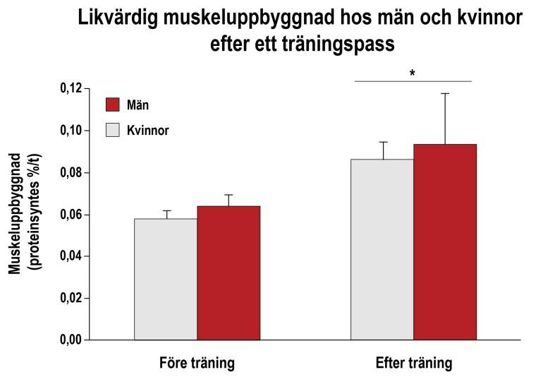 Likvärdig muskeltillväxt hos kvinnor och män
