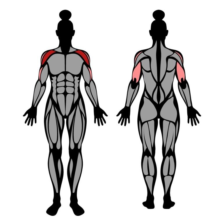 Muskler som tränas av övningen press