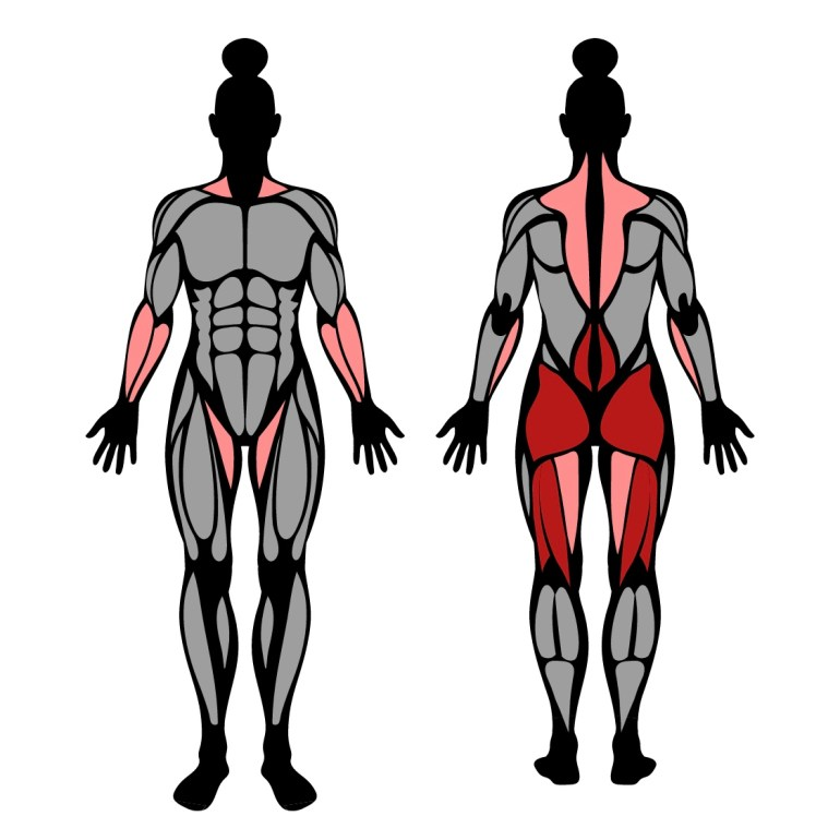 Muskler som tränas av övningen rumänska marklyft