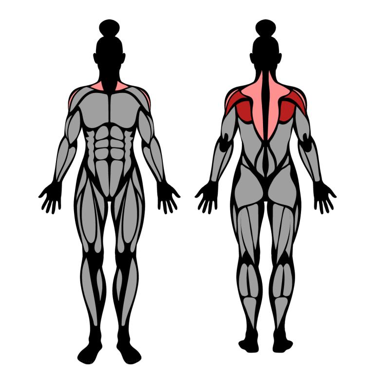 Muskler som tränas av face pull