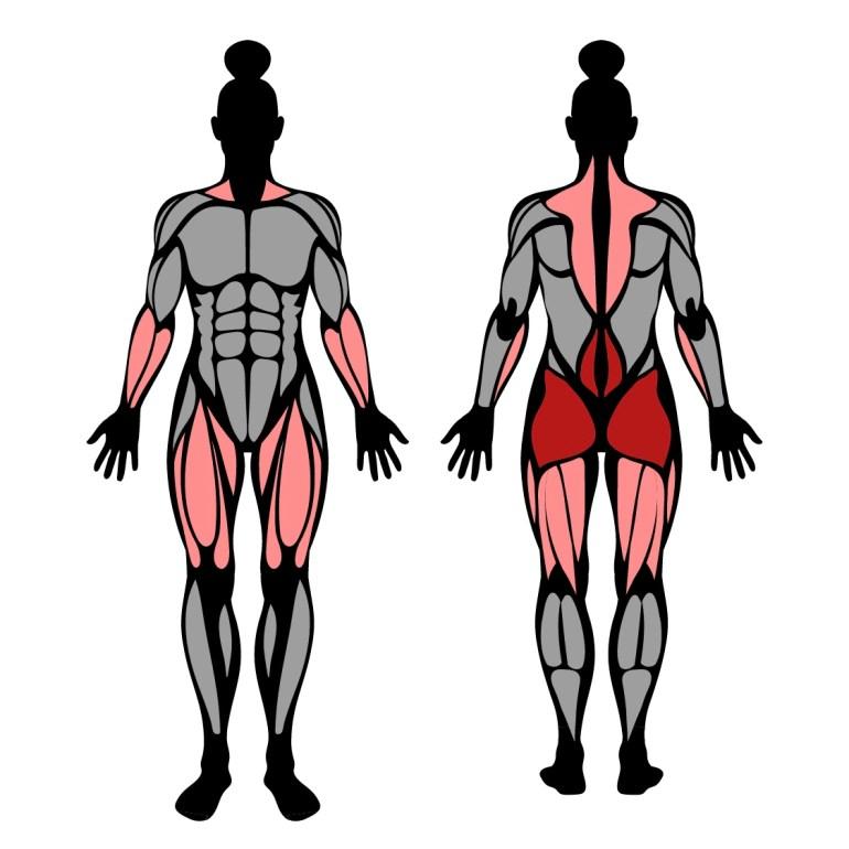 Muskler som tränas av långa marklyft