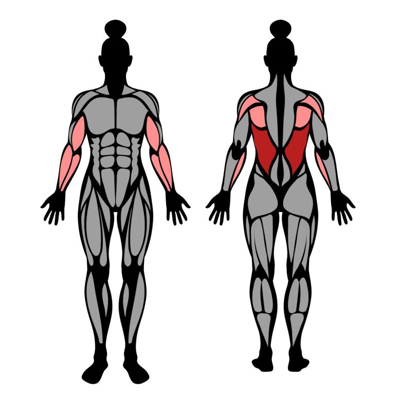 Muskler som tränas av latsdrag