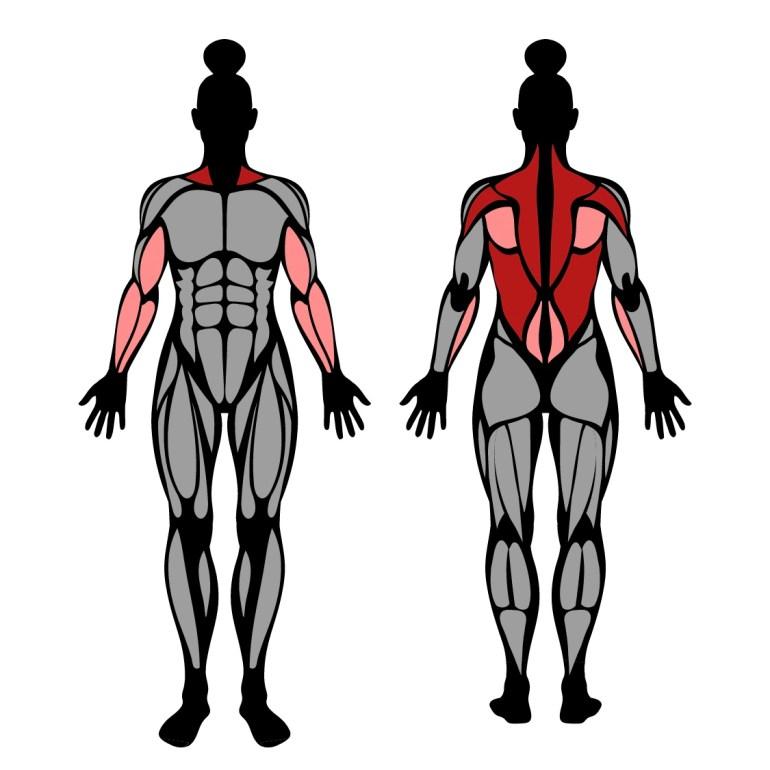Muskler som tränas av rodd med t-bar