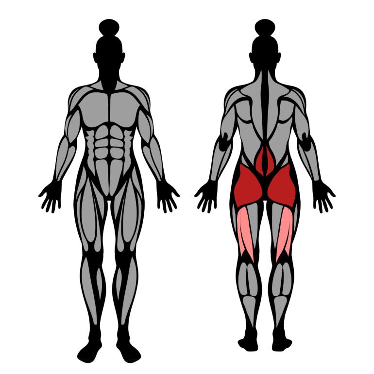Muskler som tränas av ryggresning