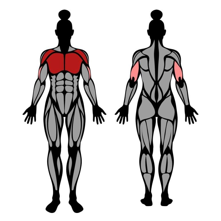 Muskler som tränas av uppåtlutande hantelpress