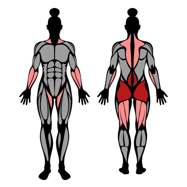 Muskler som tränas av upphöjda marklyft