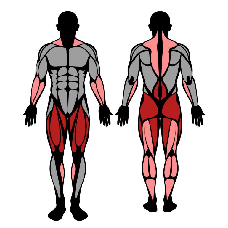 Muskler som tränas i övningen hängryck