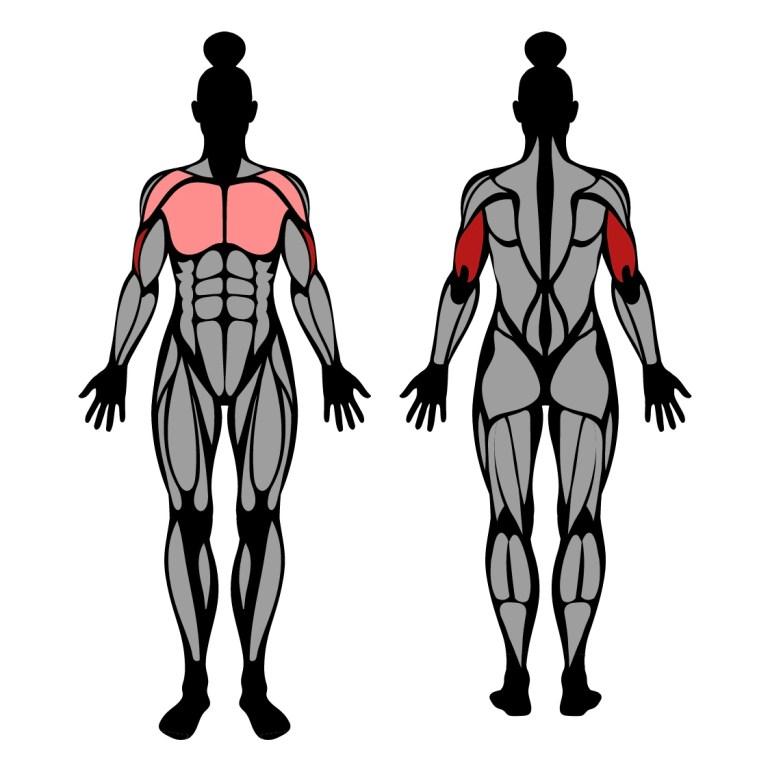 Muskler som tränas i övningen smalbänk med fötterna uppe