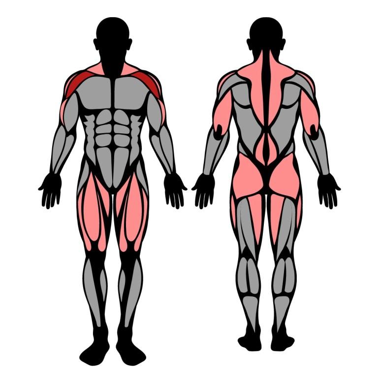 Pushpress muskler som tränas