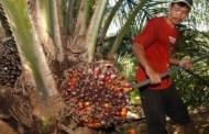 Impor Minyak Kelapa Sawit Akan Dilarang AS Termasuk Indonesia