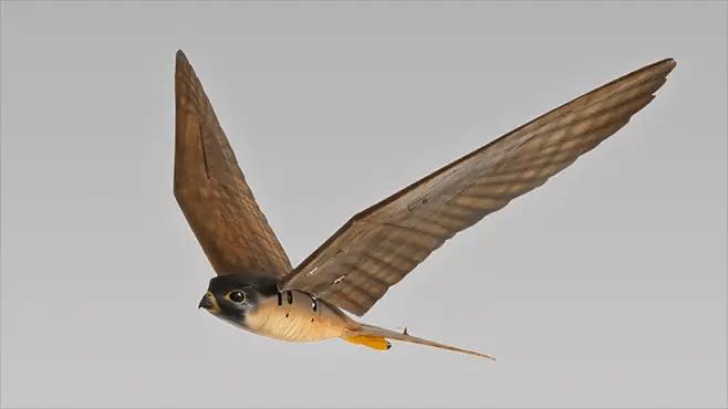 clearflightbird