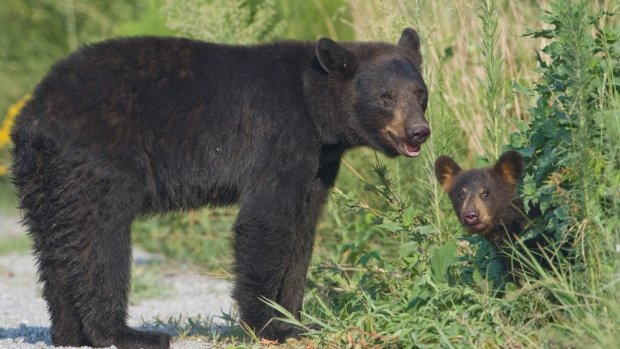 mother-bear-and-cub