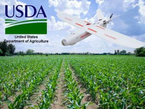 usda-corn-field-growing