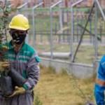 Enel-codensa ejecuta plan para beneficiar el entorno de la subestación compartir