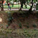 Se intervendrán solo 16 árboles en Parque El Virrey para obras de mitigación