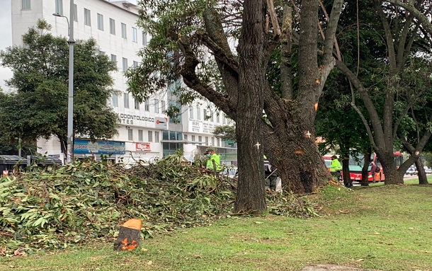 Anoche ambientalistas protestaron por la tala de árboles en la Cra 91 en Suba
