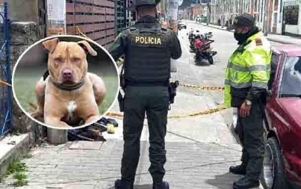 Amarraron, empalaron y apuñalaron a un perro Pitbull en el norte de Bogotá
