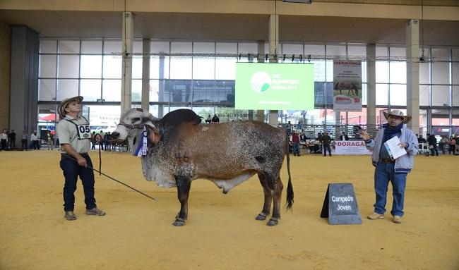 La asociación colombiana de criadores de búfalos (asobúfalos), celebra sus 30 años en el marco de Agroexpo 2021