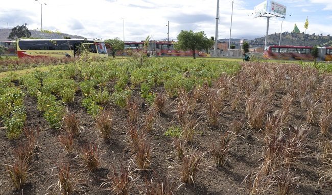 Soacha le apuesta a ser una biodiverciudad con la siembra de más de  35.000 individuos vegetales sobre la Autopista Sur