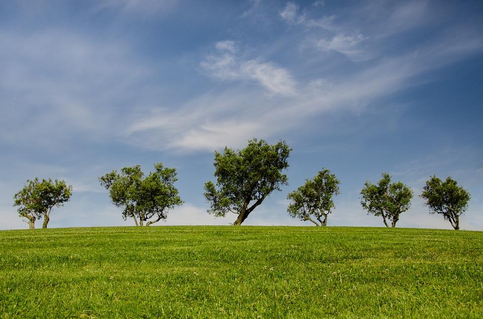 Image arbres nature