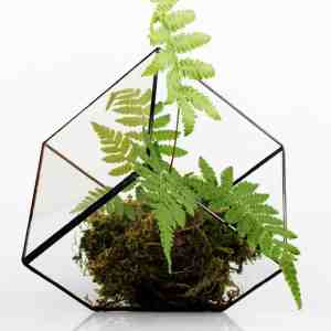 glass cube terrariumglass cube terrarium